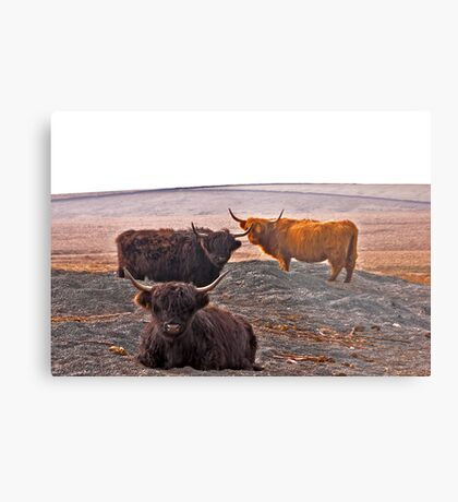 Highlanders on the Hills Metal Print