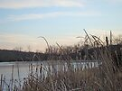 Rushes and Ice - Skymount Pond, PA by MotherNature
