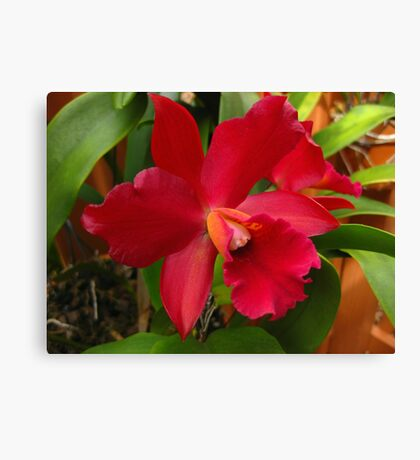 Glorious Orchid Canvas Print