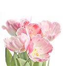 Soft, pink tulips by friendlydragon