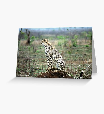 A MOMENT IN TIME - THE CHEETAH Greeting Card