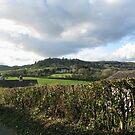 Devonshire View - Uplyme,Devon,UK by lynn carter