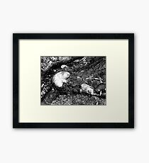 Scraped Knee Framed Print