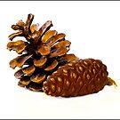 Cones by Kelvin Hughes