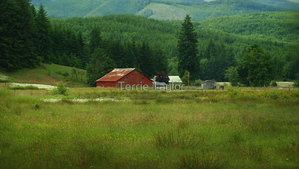 Country Life - Chehalis, Wa by Terrie Taylor