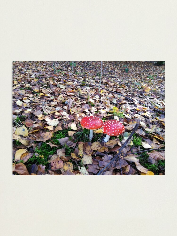 Alternate view of Magic Mushroom Photographic Print