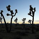 Dusk at Joshua Tree by Fran0723