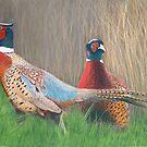 Pheasants by Marlene Piccolin
