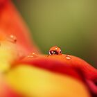 Dew Drop  by Lindsey McKnight