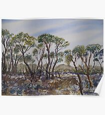 Coorong Trees Poster