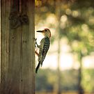 A Place to Perch by Pat Moore