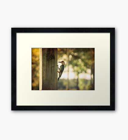A Place to Perch Framed Print