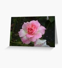 Rose after Rain Greeting Card
