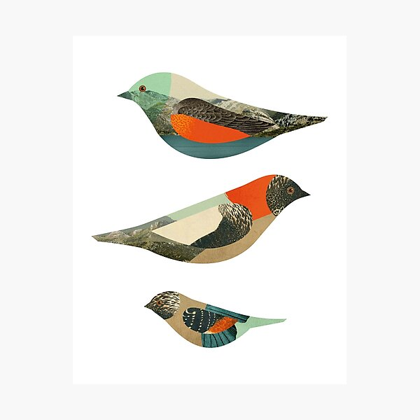 Three Birds Photographic Print