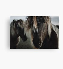 Close up straight look of horse Canvas Print