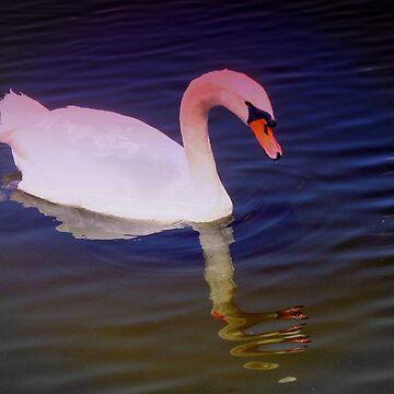 Swan mirror by rbb2676