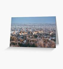 antelope... Greeting Card