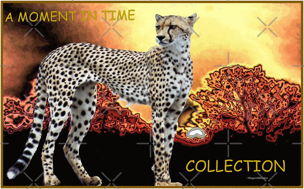 A MOMENT IN TIME - THE CHEETAH COLLECTION by Magriet Meintjes