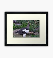 Sea Eagle 1 Framed Print