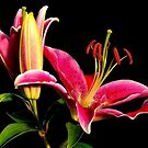Pink Tiger Lilly by RoseMarie747