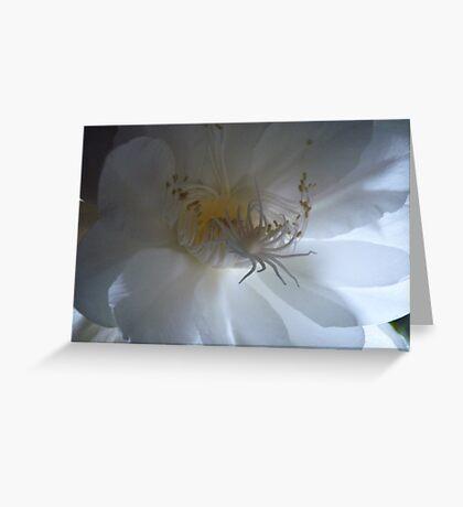 Cereus Cactus  Greeting Card