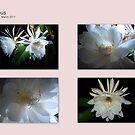 Cereus Cactus collaged by Virginia McGowan