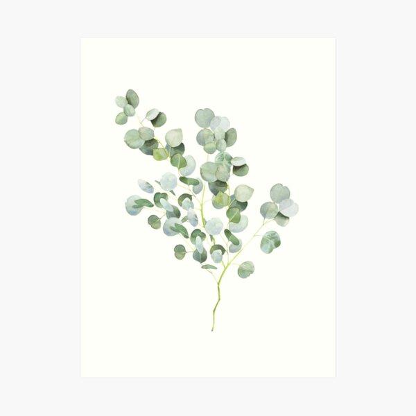 Australian Eucalyptus Twig Watercolor Art Print