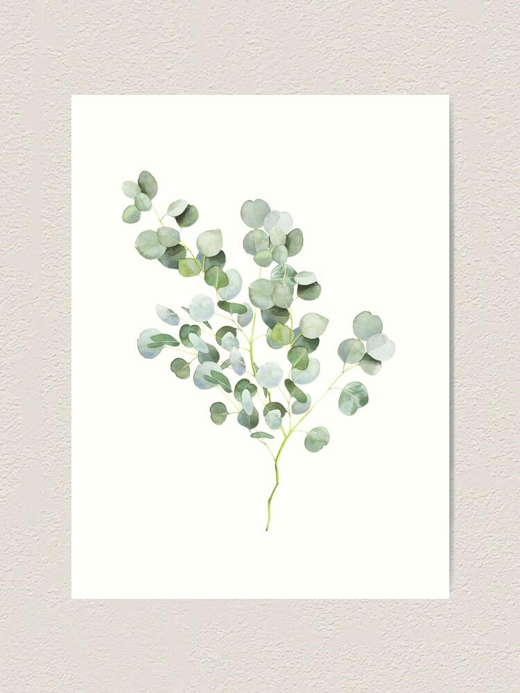 Alternate view of Australian Eucalyptus Twig Watercolor Art Print