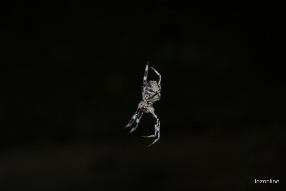 Spider by lozonline
