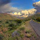 Green Desert by Rudi Venter