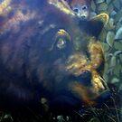 Michigan Black Bear by cdcantrell