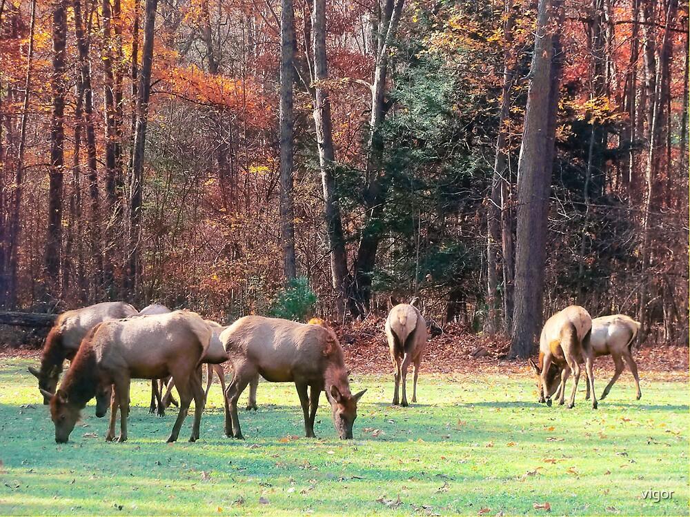 Herd of Seven by vigor