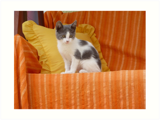 Cute Kitty by Vicki Spindler (VHS Photography)