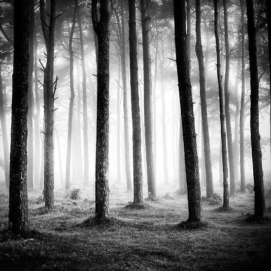 Black & Light - Dartmoor Devon by Keith  Aggett