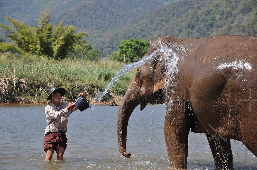 Elephant River Bath by ApeArt