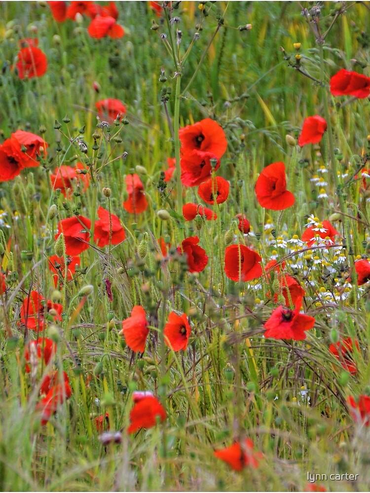 Amapolas en los campos ........... Brimpton, Berks UK de lynn45