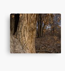 Into the Forest Canvas Print