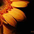 Gerbera Daisy III by Mattie Bryant