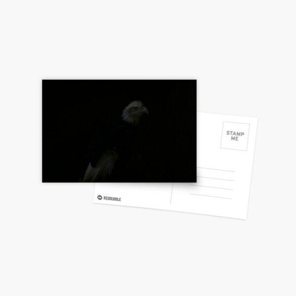 Siskiyou the Bald Eagle Postcard