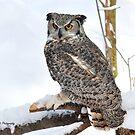 Great Horned Owl by Nancy Barrett
