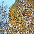 Birch Bounty by rocamiadesign