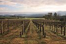 Vineyard - Yarra Valley by Timo Balk