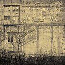 Windows by Dragomir Vukovic