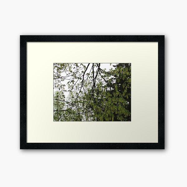 A Gathering of Leaves Framed Art Print