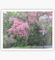 Pink by the Lamp Post Sticker