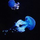 Jelly Fish by colourfreestyle