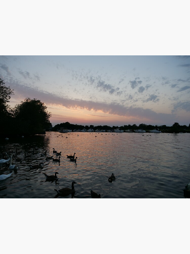Swans and Sunset at Windsor by santoshputhran