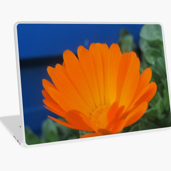 Orange Pot Marigold Laptop Skin
