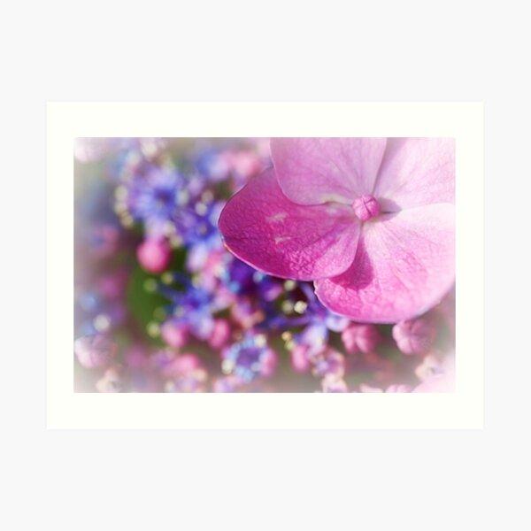 Bouquet Of Nature.... Art Print