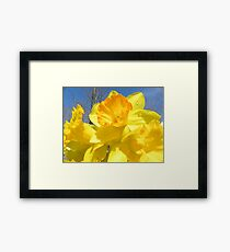 Delight Of The Daffodils Framed Print